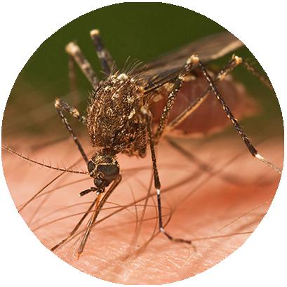 Dedetização e Controle de Mosquitos e Pernilongos - Paraná