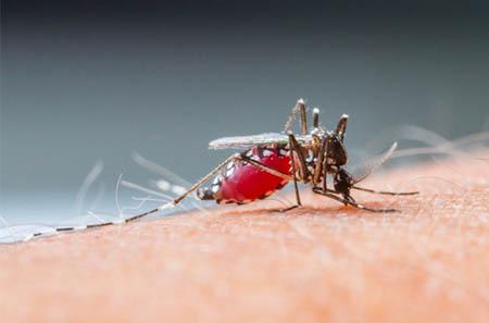 Anopheles | Dedetizadora de mosquitos no Paraná