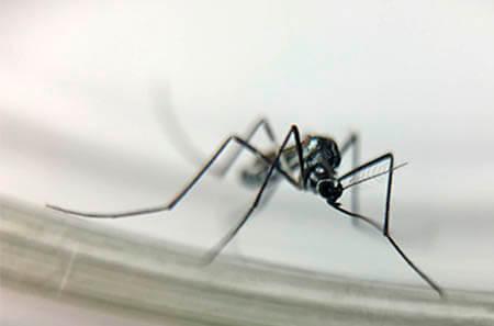 Controle de Mosquitos no Paraná