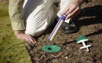 Conheça os métodos mais eficazes para o controle de cupins