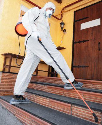 Mantenha o controle de pragas em dia: evite a proliferação de outras doenças