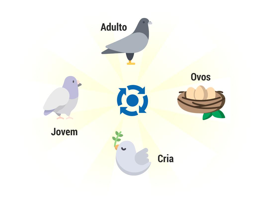 Ciclo de vidas dos pombos