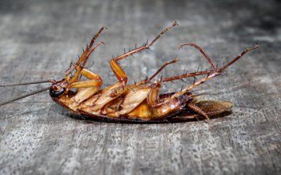 Dedetização de baratas: cuidado com as doenças causadas por essas pragas