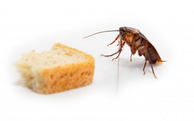 Dedetização de baratas: não deixe esse inseto entrar no menu