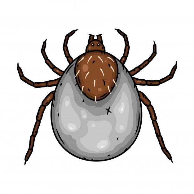 Tipos e Alergias de ácaros