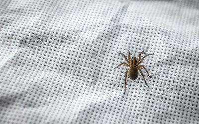 Dedetização de aranha-marrom em Curitiba