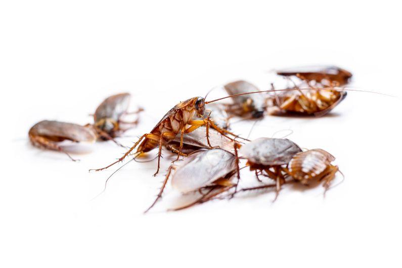 Dedetizadora em Curitiba: livre-se de insetos e animais nocivos para a saúde humana