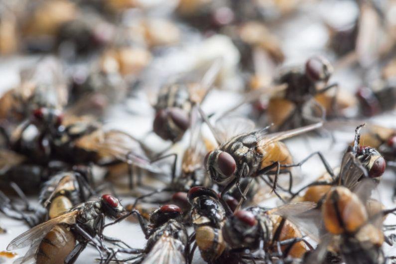 Proteja-se dos insetos alados no verão em Curitiba