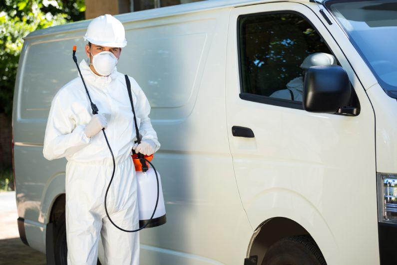 Dedetizadora em Curitiba: saiba a importância dos serviços de controle de pragas