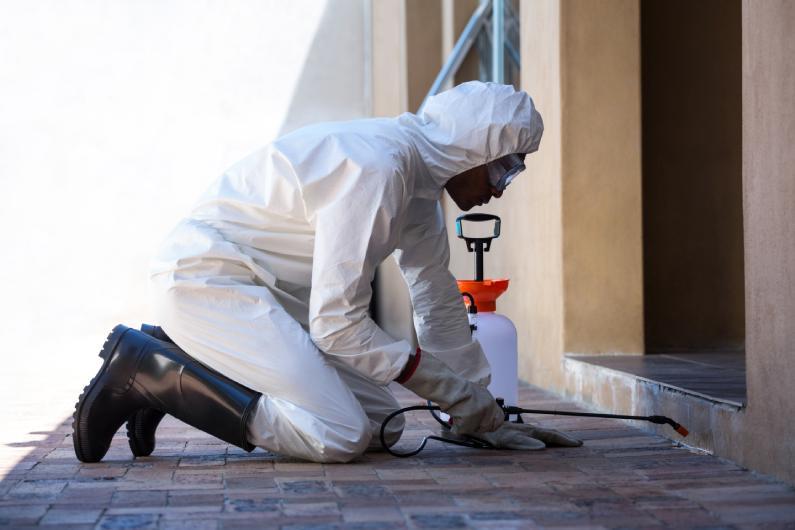 Dedetizadora: conheça os serviços especializados para o controle de pragas